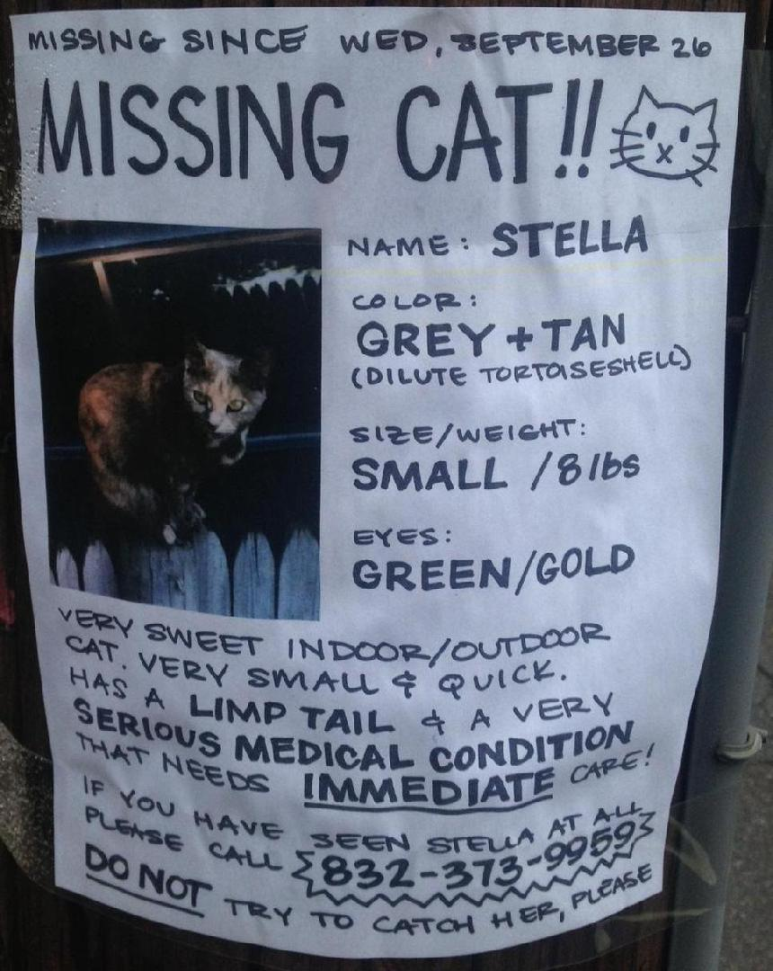 lost cat  somerville  u2013 kitty connection