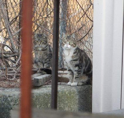 Feral cats on wall