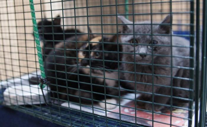 TNR cats 2013-03-15