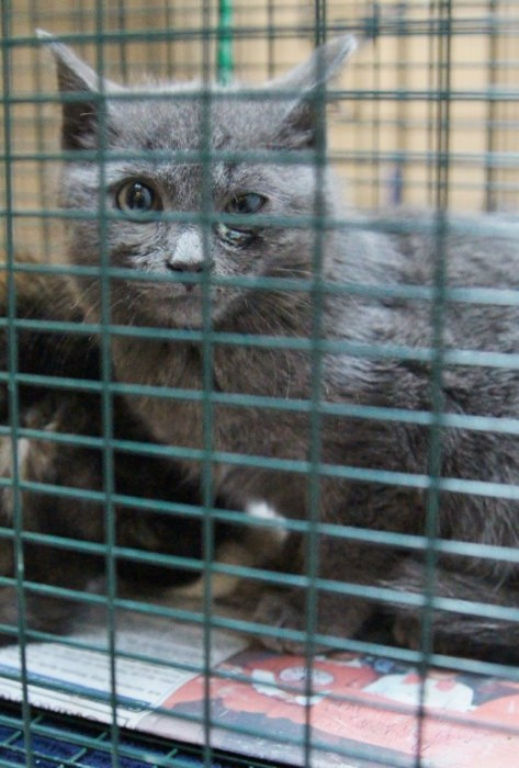 TNR kitten