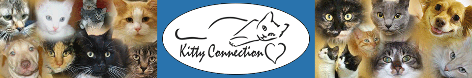 Kitty Connection