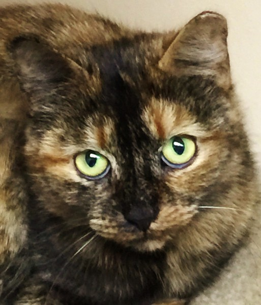 "Valentina ""Cat of the Month"""