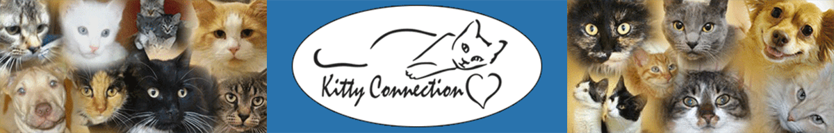 Kitty Connection Inc.
