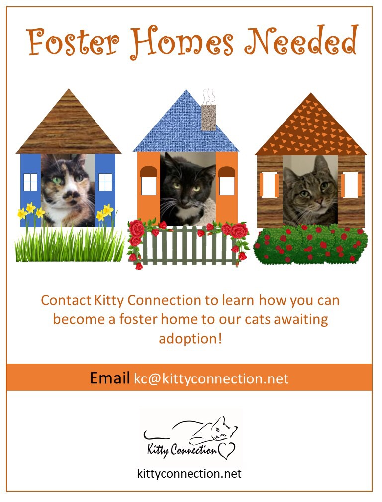 Kitty Connection – Because life is better with a cat on your